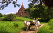 bagan temple and farmer with oxen